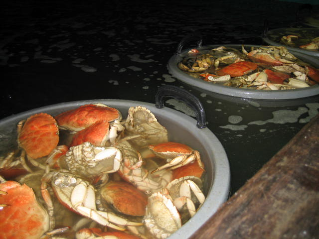 Belfast, Maine: Young's Lobster Pound | Gastrolust