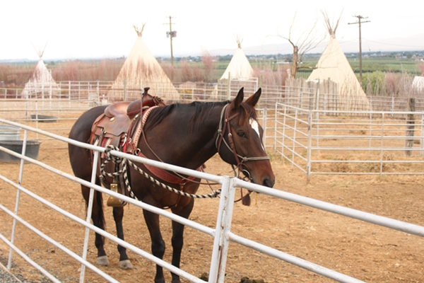 cherry_wood_horseandteepees_600_0360