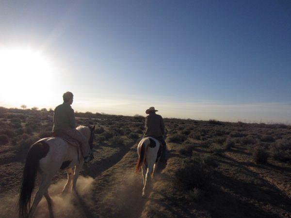 Sheraton horse ride