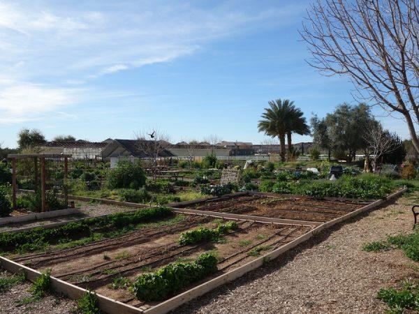 Agritopia farm