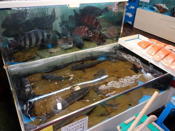 Noryangjin fish market tanks