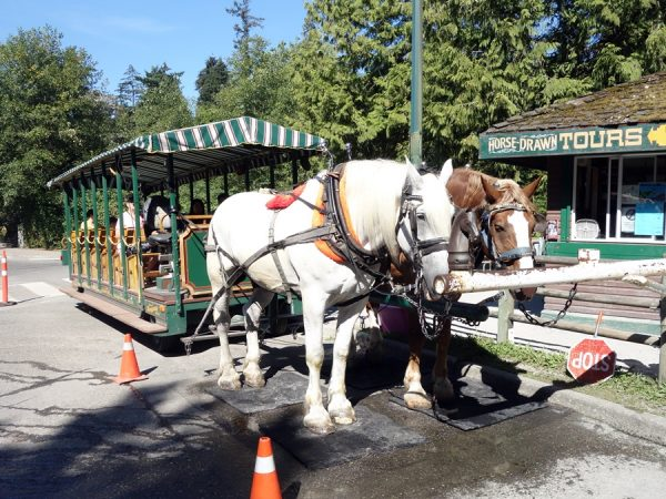 Getting ready for a Horse-Drawn Tour at Stanley Park