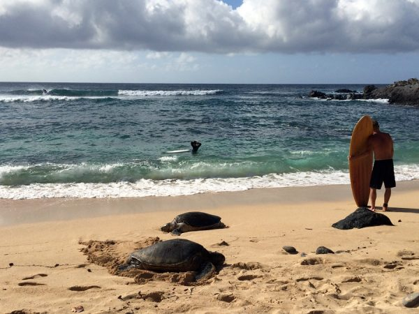 How can I resist a photo of sea turtles at Ho'okipa Beach Park in Paia?