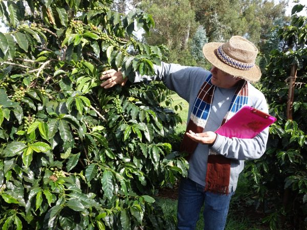 O'o Farm manager Richard Clark teaching about growing coffee