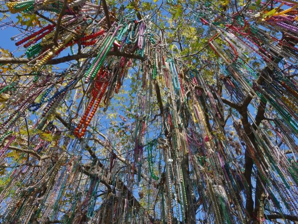 The Bead Tree on the Tulane campus, decorated to mark start of Mardi Gras season.