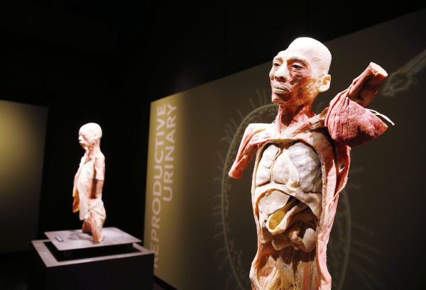 A truly educational exhibit (photo courtesy of Bodies… The Exhibition)